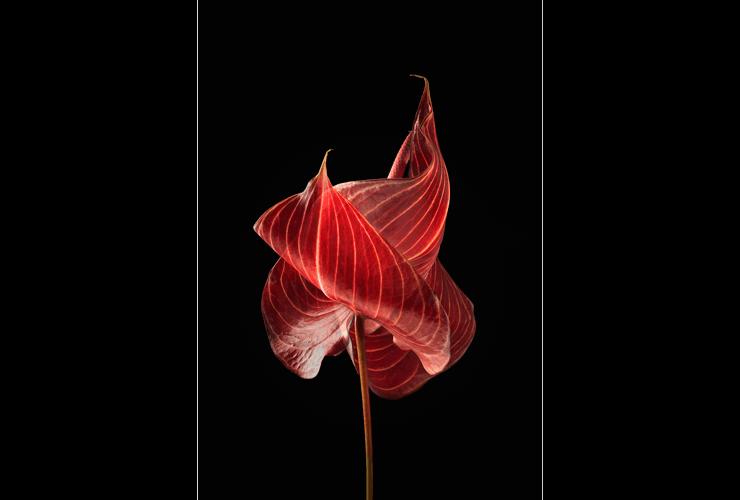 Flores de otro mundo 01, de la serie Flores de otro mundo, 2017. Copia de pigmentos minerales sobre papel algodón.